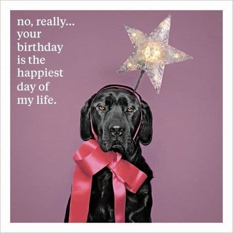 No, Really... Your Birthday Is The Happiest Day Of My Life.